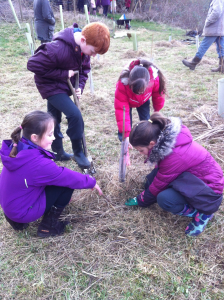 burtonbrooktreeplanting