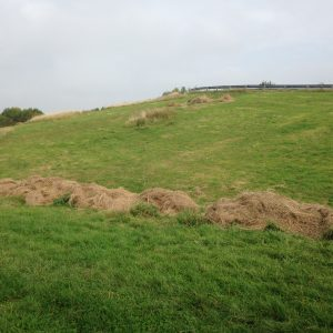 Embankment near A6 bridge after the grass was cut and hay raked off, early October 2017