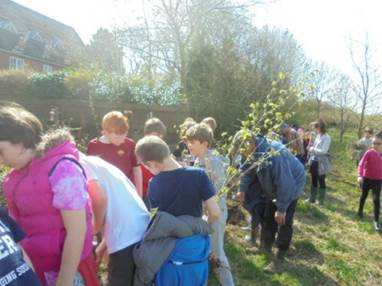 busy planting the new trees, working in groups of three or four.
